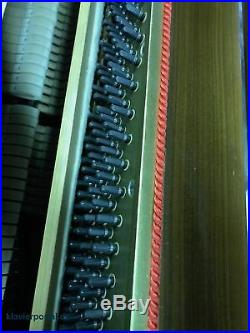 Seiler 110 in Nussbaum-Ahorn poliert